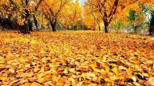 徜徉在柔软的落叶上,在一片黄色之中,融于秋的生命里