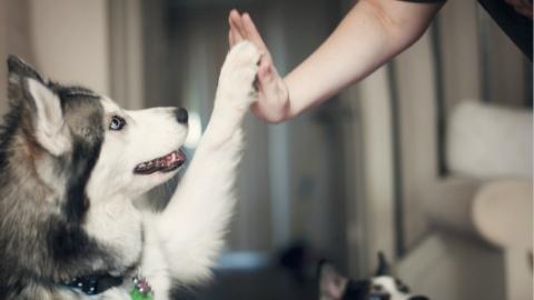 文明养犬大家谈|养犬,你真的准备好了吗?