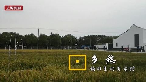 上海时刻·乡愁 最好稻米和最美艺术,寻味沪上首家田间美术馆
