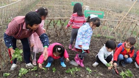 课堂搬至田园里 幼童当起小农夫