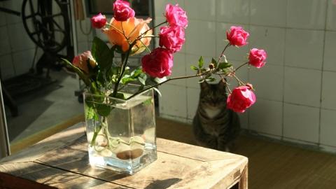 花伴孤寂暖心灵