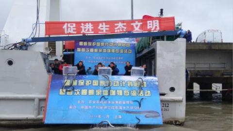 鳗鲡保护国家行动计划在沪启动 放流鳗鲡亲体3000尾
