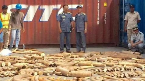 柬埔寨成功侦破3吨象牙走私案