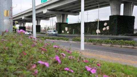 上海风采 | 低光照的高架桥下也能栽花种草 中心城区可人均增绿0.8平方米