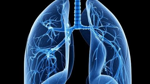 世界首创!同济大学医学团队最新成果:人类肺脏再生成为现实!