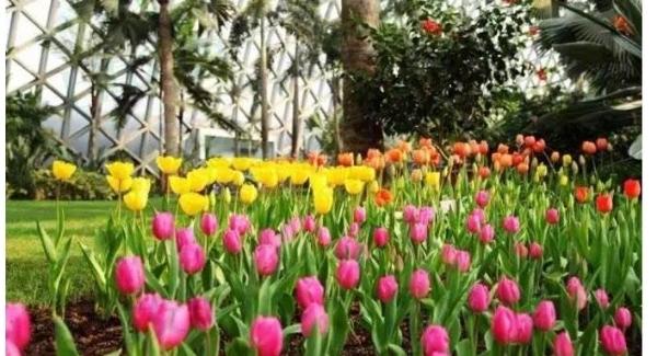"""@姓名中有""""绿水青山""""的市民,辰山植物园请你春节免费逛花展"""