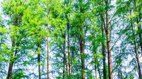 老港固废基地周边1公里范围内将建6000多亩生态公益林