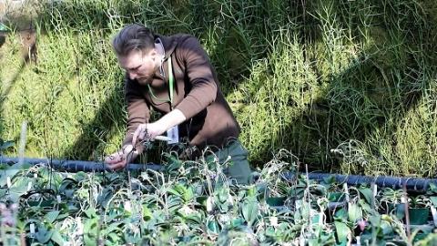 新春走基层·假日在岗人②辰山植物园首位国际志愿者不简单 绝对专业范
