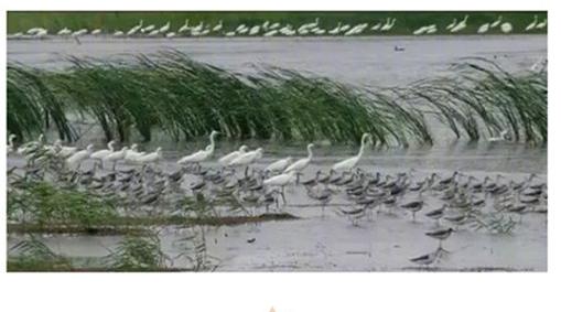 """国家级自然保护区增至469处,快来""""种草""""吧"""