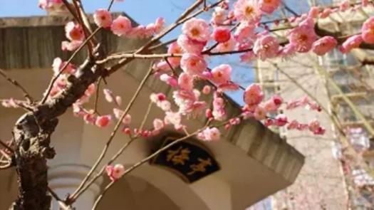 """申城各大公园春节游玩指南 足不出""""沪""""玩转新年"""