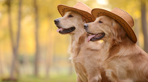 有关狗的几则幽默