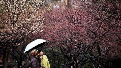 春节阴雨绵绵影响出行 市民游园少三成 生活垃圾增两成