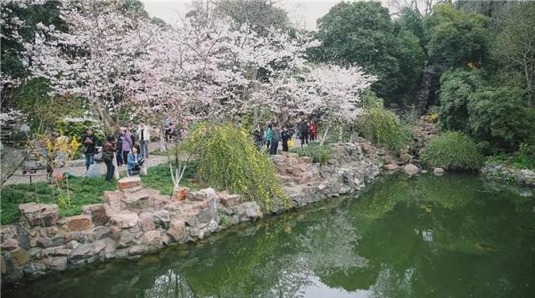 定了!鲁迅公园樱花展3月18日启幕(附赏樱攻略)