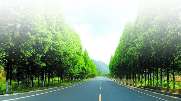 新能源公交、轨交……崇明绿色交通将这样发展!