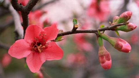十日谈 读李白春夜宴桃花园