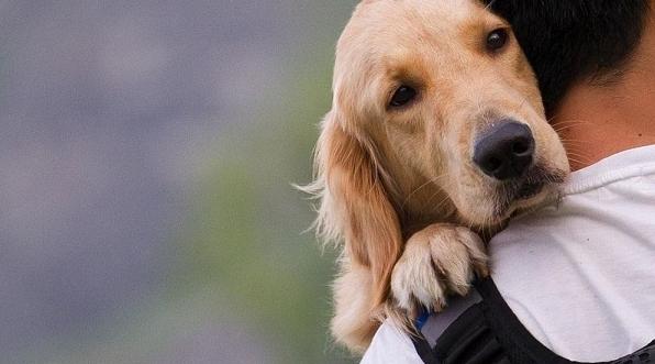 灯花 | 狗年说养狗