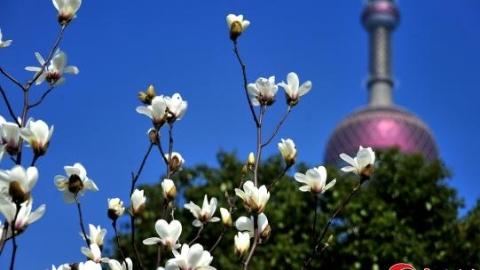 3月11日!上海入春了 刚过去的冬天只有96天