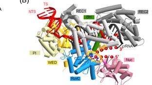我国科学家在CRISPR研究中取得突破性进展 有助于DNA临床诊断