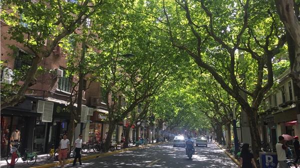 从百年愚园路被搬上荧屏说起:一条条老马路像一本本历史书