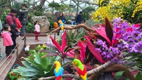那些花儿一生或许只见一次……来辰山植物园吧!国际兰展周五揭幕
