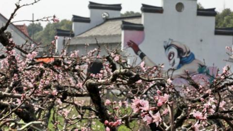 满园春色竞相艳  2018金山田野百花节明开幕
