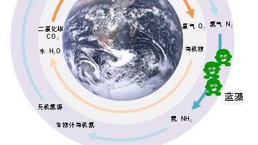 """蓝藻也有个储存氮的""""驼峰"""" 中国科学家发现新型氮代谢途径"""