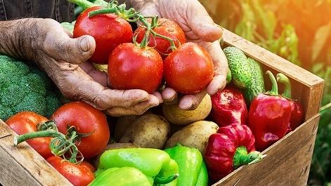 """菜篮子果盘子鱼池子有创新 新型职业农民将有更多科技""""获得感"""""""