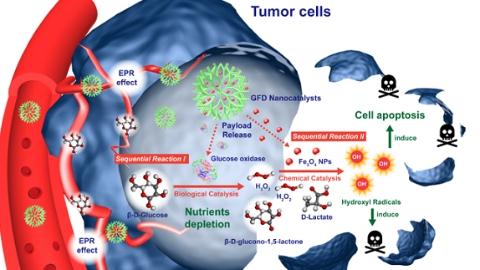 肿瘤治疗有了新思路!中科院上海硅酸盐所提出纳米催化医学新概念