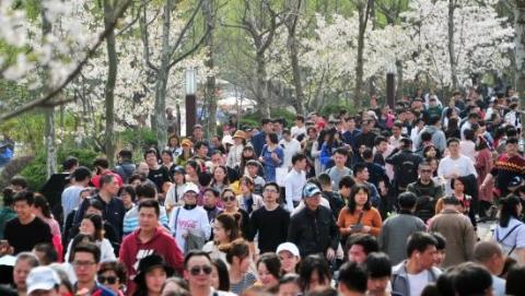 上海樱花节昨闭幕 总客流量逾166万人次创新高