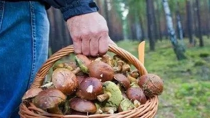 匈牙利森林里的野菜不能随便采