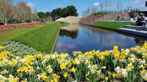 天下游 |  春暖花开,去荷兰和郁金香一起怒放吧