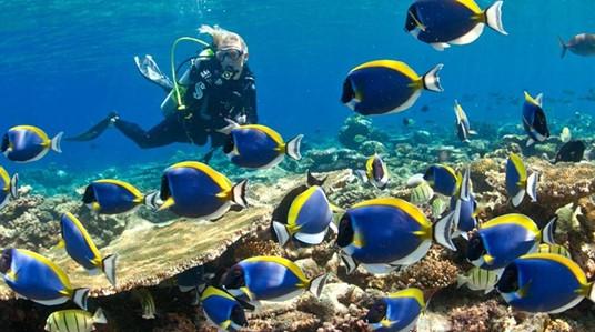 请让我静静地看着你,给所有潜水爱好者的一封情书