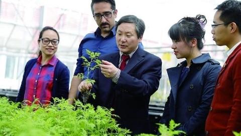 除了抗疟疾,青蒿素还有更多妙用!上海交大团队破译青蒿6万余编码基因