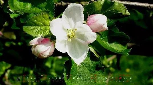 5月份,上海的公园有这么多花展和活动