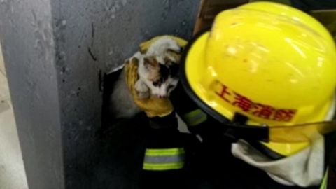猫咪抓老鼠不慎掉进空心柱内 消防队员及时营救