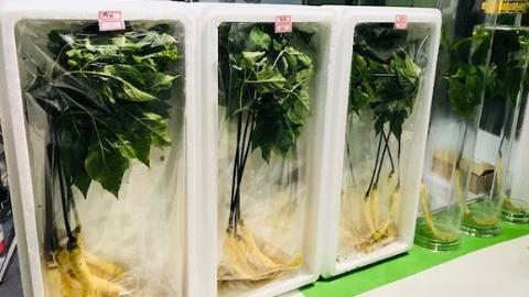 人参蘸酱吃  蔬菜现场采  上海农博会打出健康牌