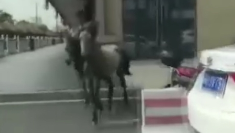"""惊险!嘉定一商场外两匹马冲上马路""""遛弯"""""""