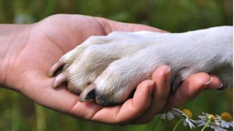 意大利9九旬人去世 给宠物狗留下百万遗产