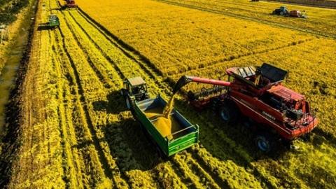 """""""崇明大米""""今年再升级:不用化学肥料、不施化学农药"""