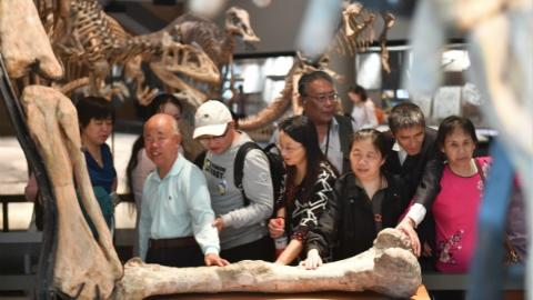 20名盲人走进上海自然博物馆:触摸恐龙标本享受奇妙之旅