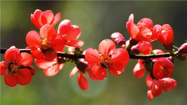 生如春花之绚烂