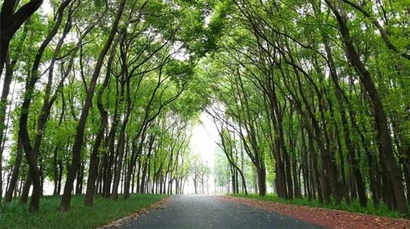 """城市里的""""绿野仙踪""""!长宁区外环林带生态绿道新面貌美翻了!"""