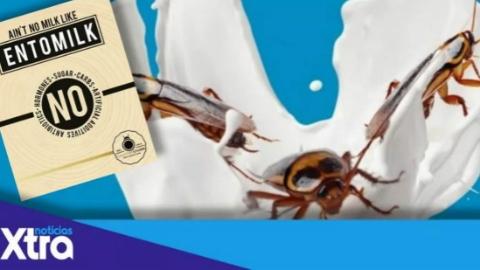 蟑螂奶便宜又营养,将成传统奶类替代品?