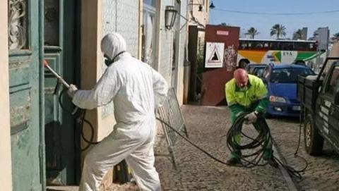 四海城事 | 蟑螂泛滥,老鼠成灾,里斯本有害生物治理成难题