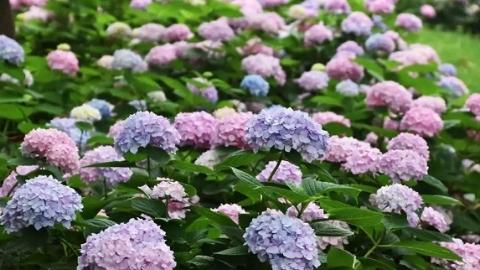 """从绿化到彩化,上海的夏天是什么颜色?清新淡雅的""""夏之韵""""正在奏响"""
