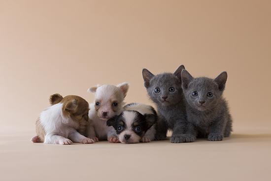 日本宠物保险有市场_年增长率近20%