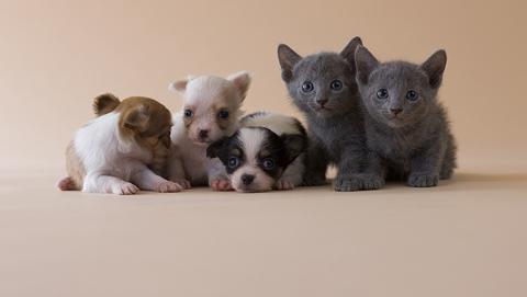 日本宠物保险有市场 年增长率近20%