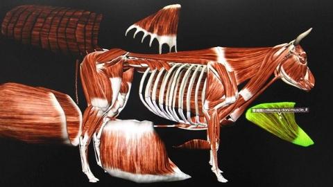 """动物医学虚拟仿真实训中心:虚拟解剖,切下来的组织再""""长""""回去"""