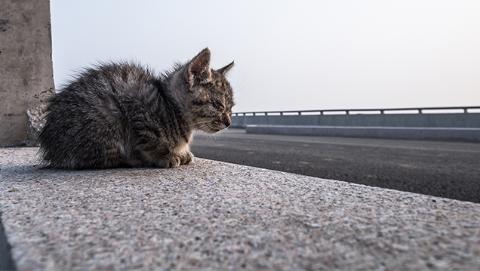 高速停车救猫虽为善举却不可取  蜀黍表示应及时报警
