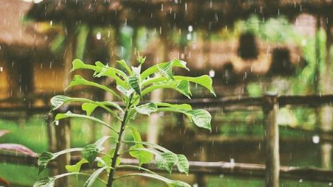 边看边聊|淋雨之后……